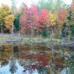 A wetland at Cliffland in the fall