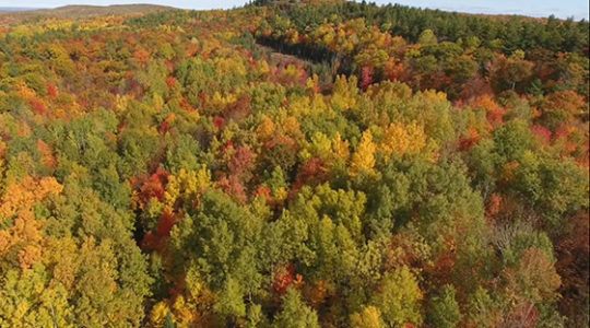 Colourful Walk Back in Time at Blueberry Mountain, Oct. 1