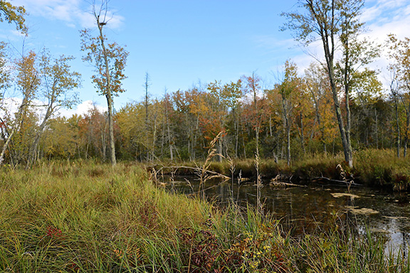 Mississippi Madawaska Land Trust » Preserving the land  Protecting