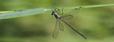 Discover Dragonflies & Butterflies, June 23