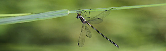Discover Dragonflies & Butterflies, June 23
