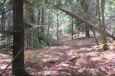 Rose Hill Nature Walk, July 28