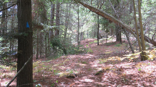 Rose Hill Nature Walk, August 11