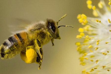 Bee Hotel Workshop, September 16