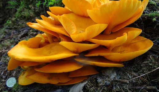 Discover the Fun in Fungi, October 6