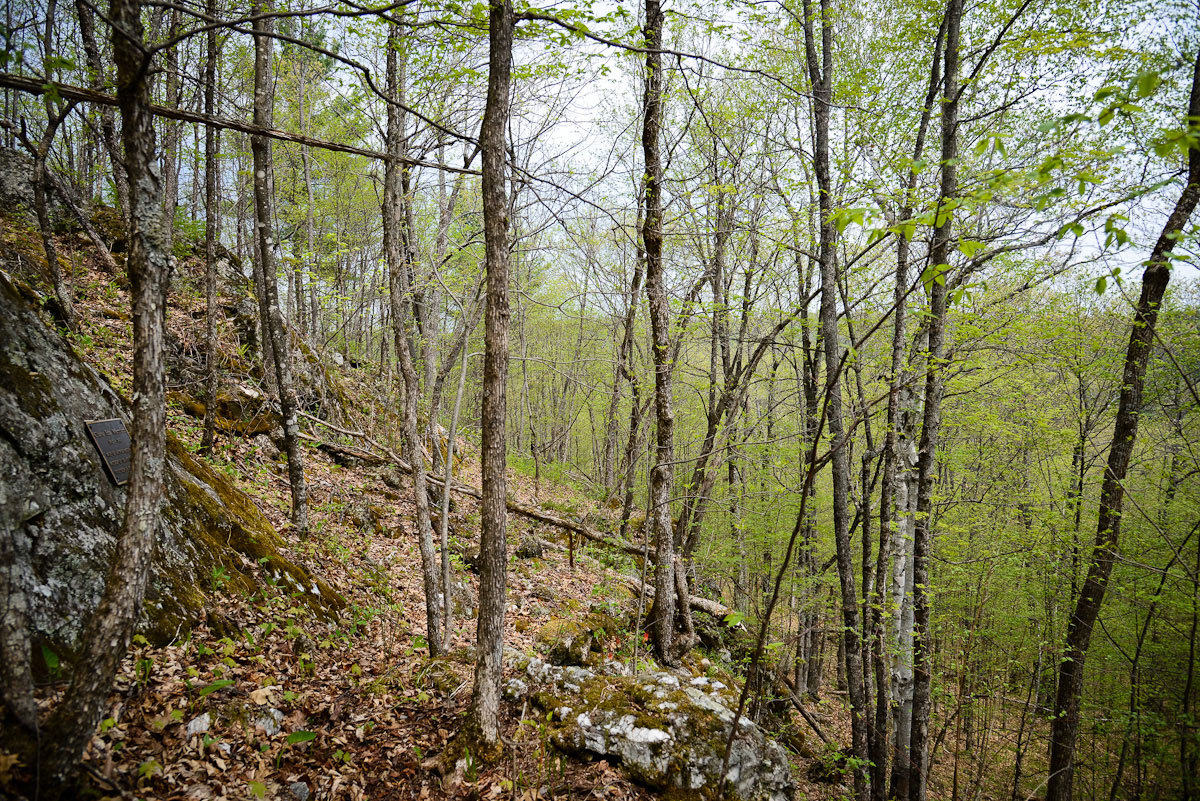 Early spring growth on the ridges